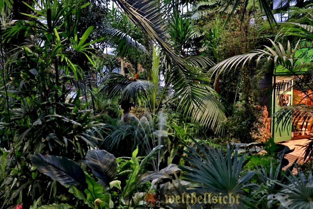palmiarnia wałbrzych