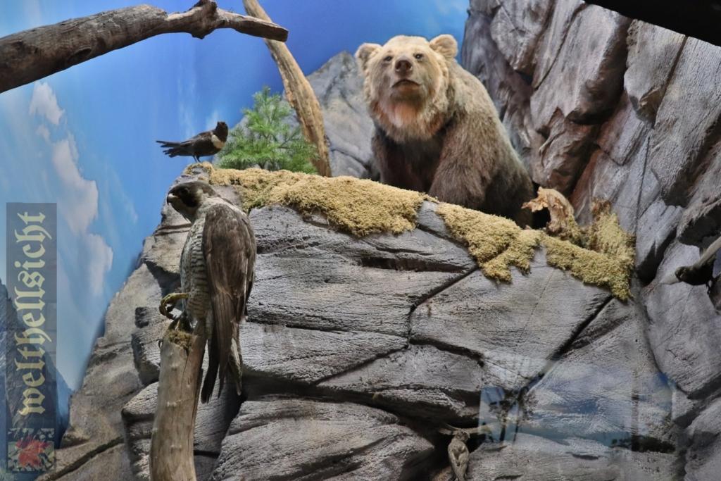 niedźwiedzie w sudetach