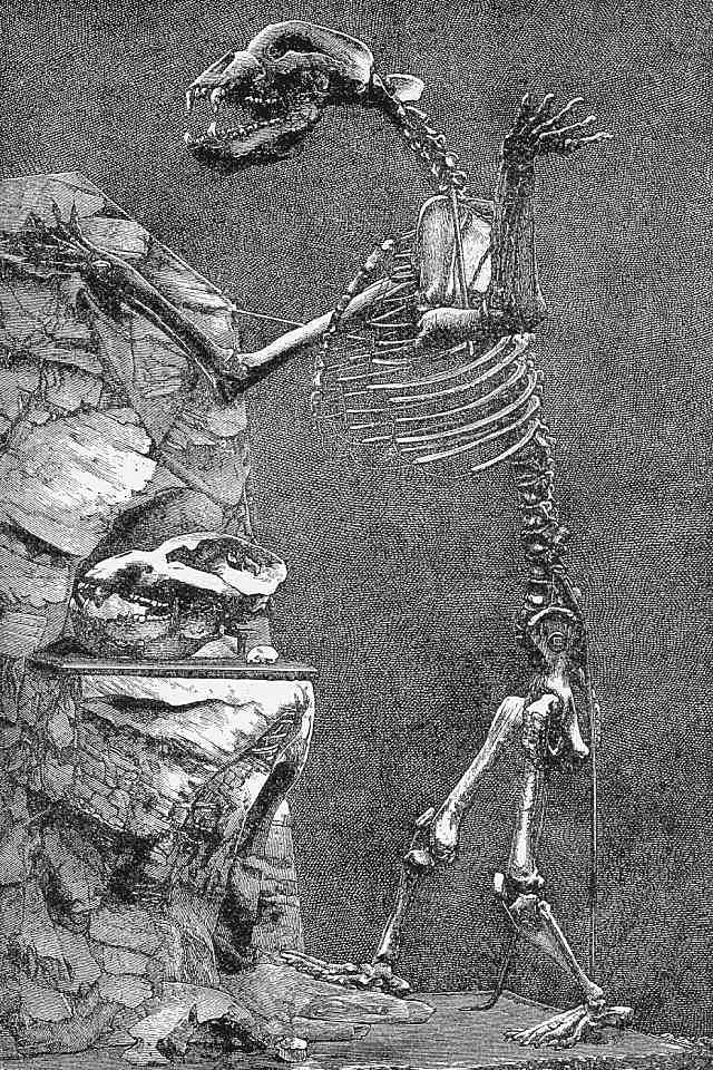 szkielet niedźwiedzia